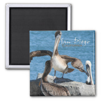 Imãs de geladeira dos pelicanos de San Diego Calif