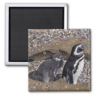 Ímãs dos pinguins da mãe & do bebê imãs