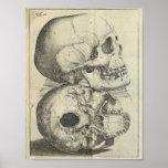 Impressão 1616 da anatomia dos crânios do vintage