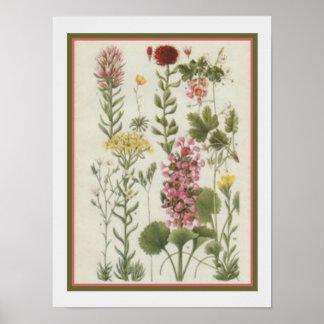 Impressão 1849 botânico por Jane Loudon 12x16