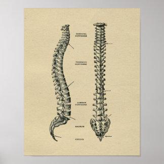 Impressão 1902 humano do vintage da anatomia da