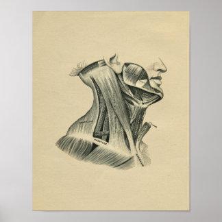Impressão 1902 humano do vintage da anatomia do