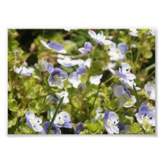 Impressão 7x5 fotográfico floral delicado arte de fotos
