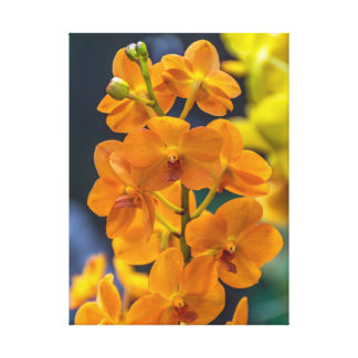 Impressão alaranjado das canvas das orquídeas