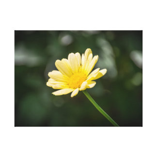 Impressão amarelo das canvas da margarida