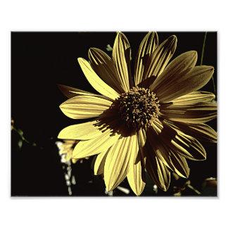 Impressão amarelo Subdued da foto 10x8