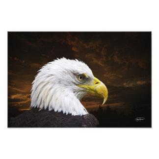 Impressão americano da águia americana - o comprar impressão de foto