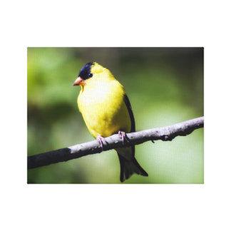 Impressão americano das canvas do Goldfinch