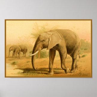 Impressão animal da arte do vintage dos elefantes