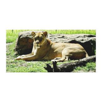 Impressão animal - leão