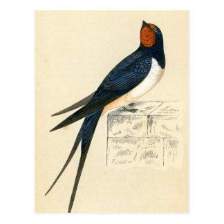 Impressão antigo de uma andorinha cartão postal