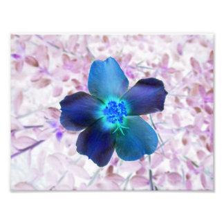 Impressão azul 8,5 x 11 da flor fotografias