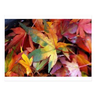 Impressão bonito das folhas de outono cartão postal