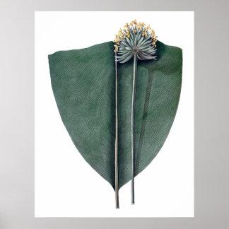 Impressão botânico das folhas grandes tropicais