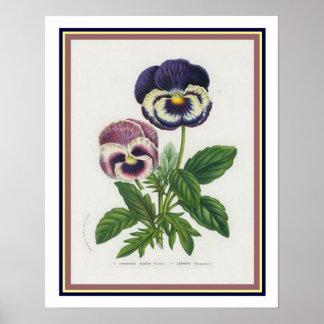 """Impressão botânico do """"amor perfeito"""" de Van"""