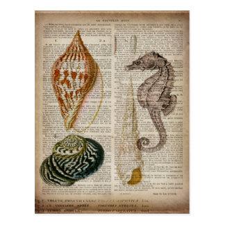 impressão botânico do seashell francês do vintage cartão postal