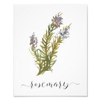 Impressão botânico Rosemary da erva da aguarela Foto