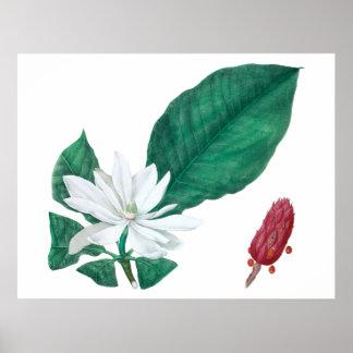 Impressão branco da flor da magnólia grande
