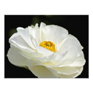 Impressão branco da foto da flor do campo impressão de foto