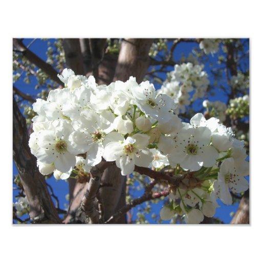 Impressão branco da foto do primavera das flores