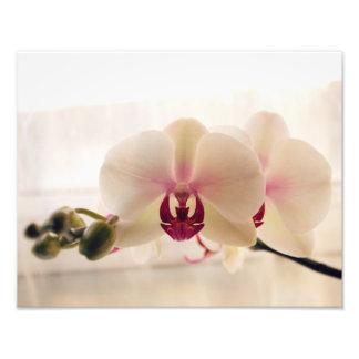 Impressão branco da fotografia da orquídea