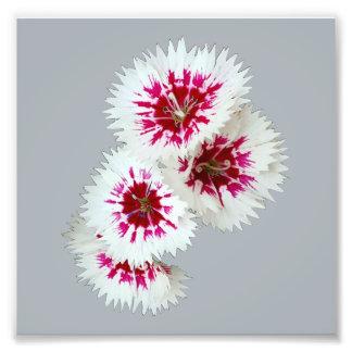Impressão branco & roxo da foto da flor do