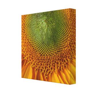 Impressão brilhante das canvas do girassol