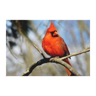 Impressão cardinal do norte das canvas do retrato