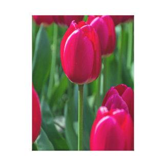 Impressão cor-de-rosa das canvas da tulipa