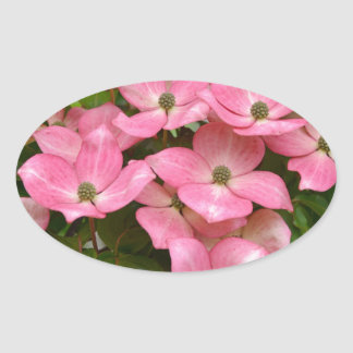 Impressão cor-de-rosa das flores do dogwood do adesivo oval