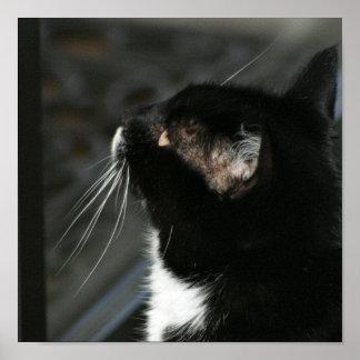 Impressão curioso do gato