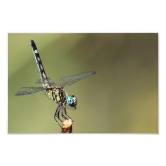 Impressão customizável, libélula com olhos do foto