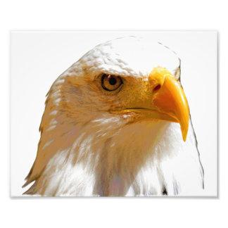 Impressão da águia americana fotografias