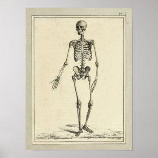 Impressão da anatomia do esqueleto do vintage 1831