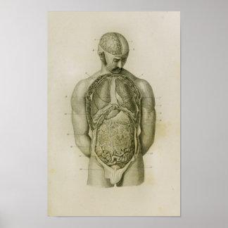 Impressão da anatomia do vintage do cérebro dos