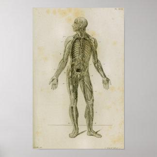 Impressão da anatomia do vintage do sistema