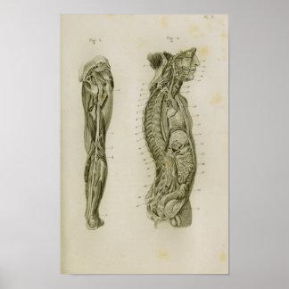 Impressão da anatomia do vintage dos pés do corpo