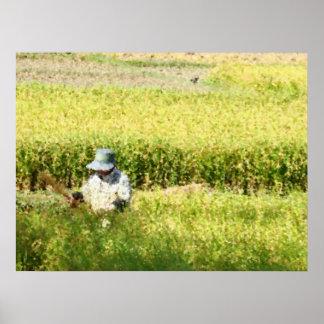 Impressão da arte da colheita do arroz