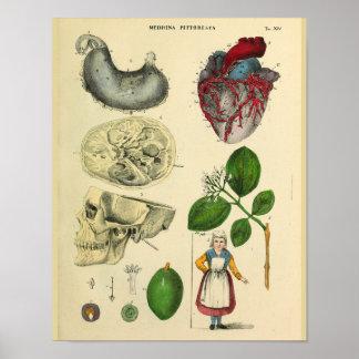 Impressão da arte do vintage da anatomia do