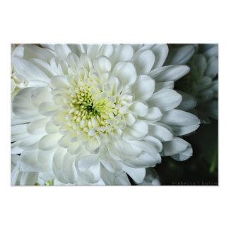 Impressão da flor do crisântemo foto