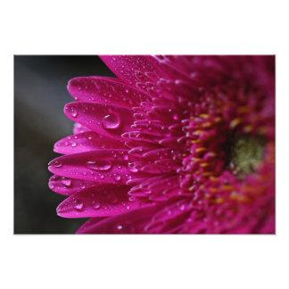 Impressão da flor do rosa quente foto