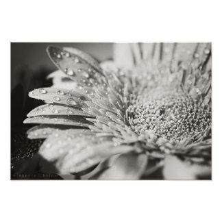 Impressão da flor preta & branca & da foto das
