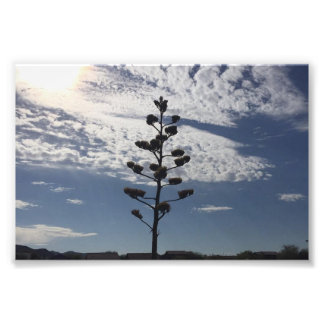 impressão da foto 6X4 da agave de florescência