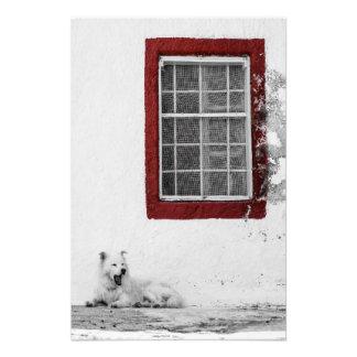 Impressão da foto - cão branco de bocejo em
