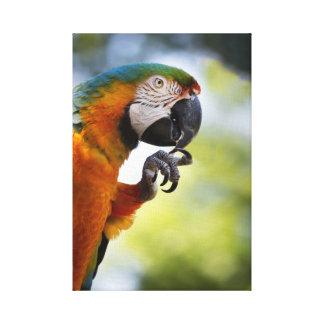 impressão da foto da arte de um macaw