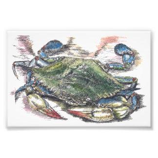 Impressão da foto da arte do caranguejo azul impressão de foto