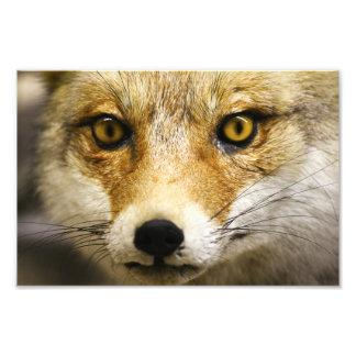 Impressão da foto da cara do Fox