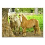 Impressão da foto da fazenda do cavalo de três pôn
