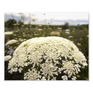 Impressão da foto da flor do laço impressão de foto