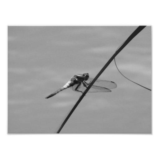 Impressão da foto da libélula